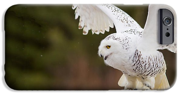 Snowy Day iPhone Cases - Close-up Of A Snowy Owl Bubo Scandiacus iPhone Case by Panoramic Images