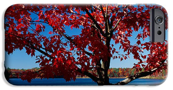 Massachusetts Autumn Scenes iPhone Cases - Close-up Of A Tree, Walden Pond iPhone Case by Panoramic Images