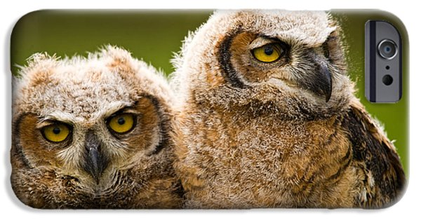 Wild Animals iPhone Cases - Close-up Of A Two Great Horned Owlets iPhone Case by Panoramic Images