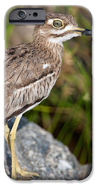 Fauna iPhone Cases - Close-up Of A Water Thick-knee Burhinus iPhone Case by Panoramic Images