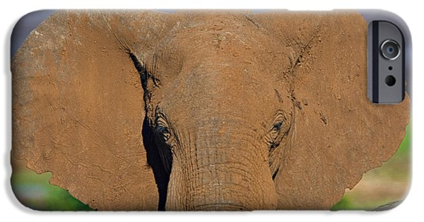 Elephants iPhone Cases - Close-up Of An African Elephant, Lake iPhone Case by Panoramic Images