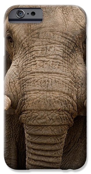 East Africa Photographs iPhone Cases - Close-up Of An African Elephant iPhone Case by Panoramic Images