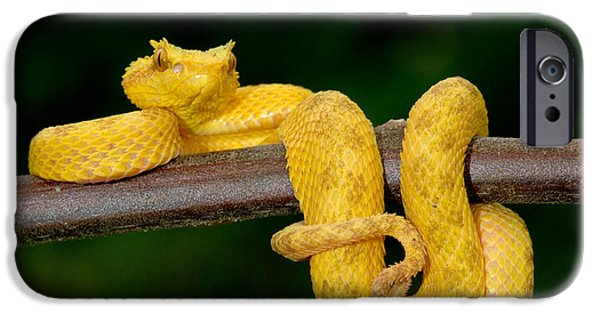 One iPhone Cases - Close-up Of An Eyelash Viper iPhone Case by Panoramic Images