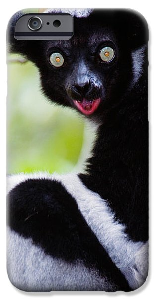 Wild Animals iPhone Cases - Close-up Of An Indri Lemur Indri Indri iPhone Case by Panoramic Images