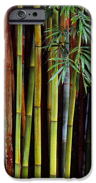 Botanical Photographs iPhone Cases - Close-up Of Bamboos, Kanapaha Botanical iPhone Case by Panoramic Images