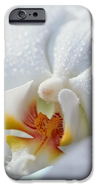 White Orchid iPhone Cases - Close Up Of Center Of White Orchid iPhone Case by Panoramic Images