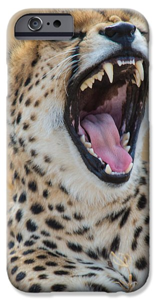 Fauna iPhone Cases - Close-up Of Cheetah Acinonyx Jubatus iPhone Case by Panoramic Images