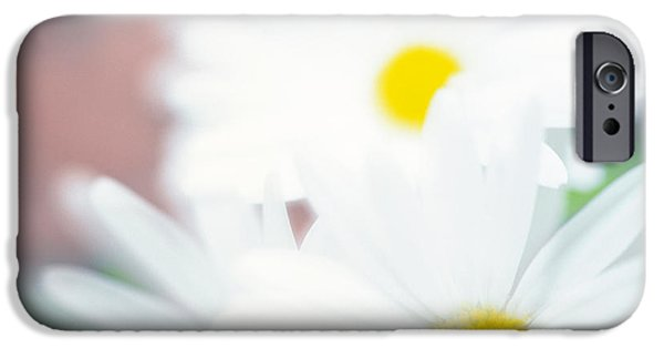 White Daisies iPhone Cases - Close Up Of Daisies With Purple iPhone Case by Panoramic Images