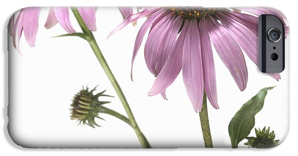 Purple Images iPhone Cases - Close-up Of Echinacea Flower iPhone Case by Bruno Crescia