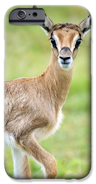 Fauna iPhone Cases - Close-up Of Grants Gazelle Nanger iPhone Case by Panoramic Images