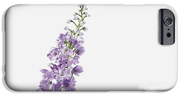 Purple Images iPhone Cases - Close-up Of Lavender Flower iPhone Case by Bruno Crescia