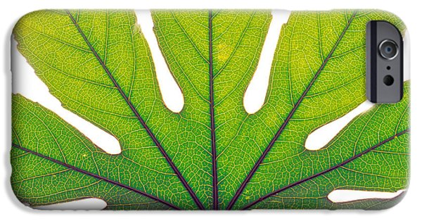 Texture iPhone Cases - Close Up Of Leaf Vein iPhone Case by Panoramic Images
