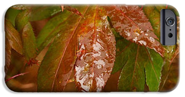 Autumn Leaf On Water iPhone Cases - Close-up Of Raindrop On Maple Leaves iPhone Case by Panoramic Images