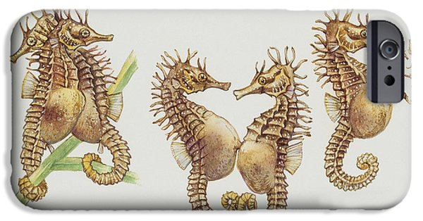 Fish Drawings iPhone Cases - Close-up of sea horses iPhone Case by English School