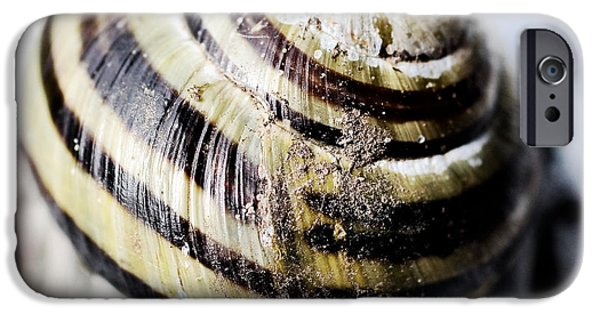 Aquatic Mixed Media iPhone Cases - Close up of sea shell iPhone Case by Toppart Sweden