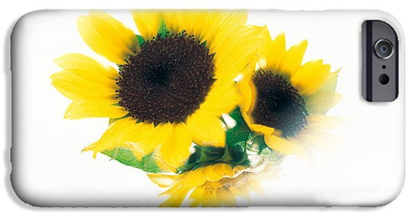 Cut-outs iPhone Cases - Close Up Of Sunflower Head iPhone Case by Panoramic Images