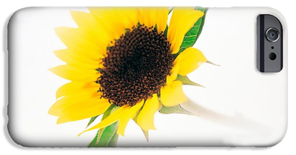 Stability iPhone Cases - Close Up Of Sunflower iPhone Case by Panoramic Images