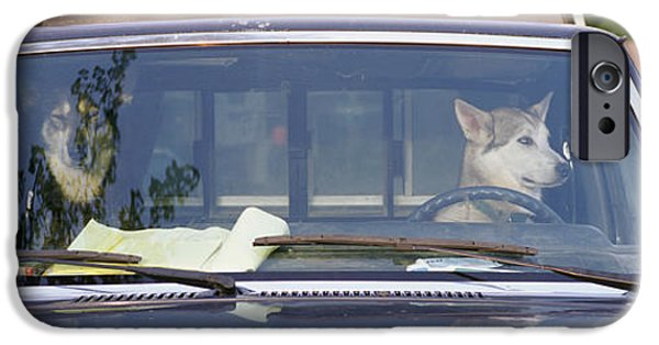 Dog Photography iPhone Cases - Close-up Of Two Dogs In A Pick-up iPhone Case by Panoramic Images