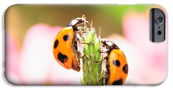 Close Focus Nature Scene iPhone Cases - Close Up Of Two Ladybugs iPhone Case by Panoramic Images