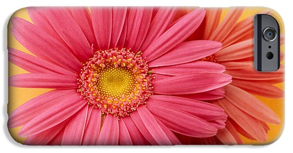 Zinnias iPhone Cases - Close Up Of Two Pink Zinnias On Yellow iPhone Case by Panoramic Images