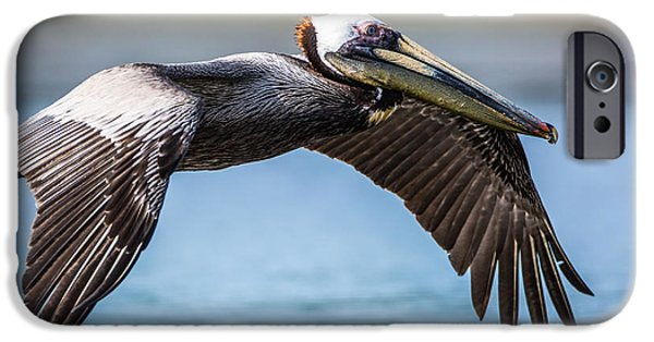 Beach iPhone Cases - Closeup of a Flying Brown Pelican iPhone Case by Andres Leon