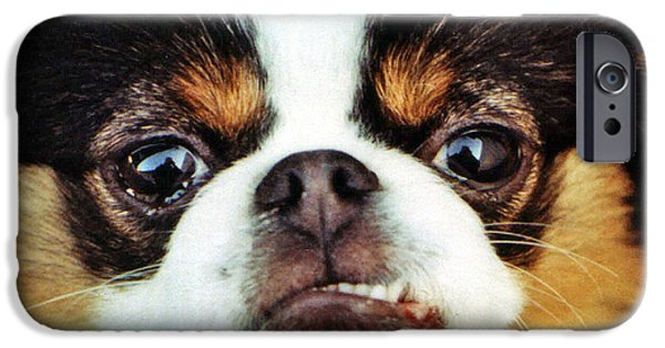 Japanese Chin Puppy iPhone Cases - Closeup of a Japanese Chin Dog iPhone Case by Jim Fitzpatrick