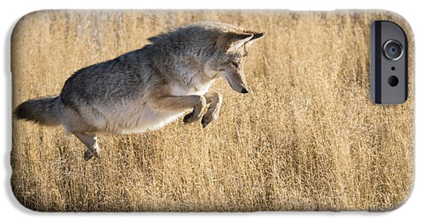 Coyote Art iPhone Cases - Closing In iPhone Case by Sandra Bronstein