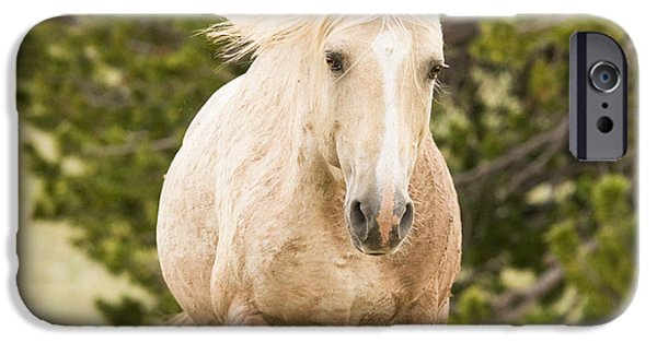The Horse Photographs iPhone Cases - Cloud Comes Up the Hill iPhone Case by Carol Walker