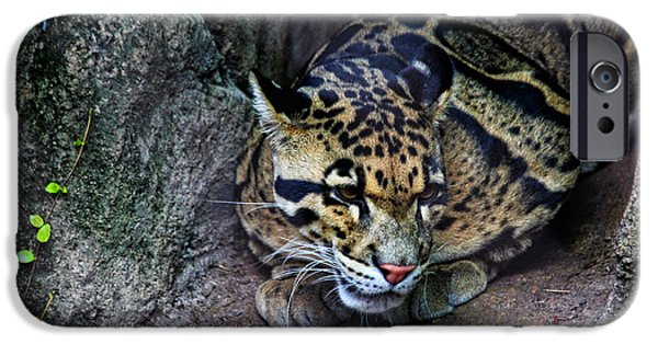Raining iPhone Cases - Clouded Leopard iPhone Case by Judy Vincent