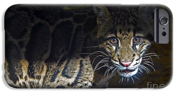 Snow iPhone Cases - Clouded Snow Leopard cub iPhone Case by Frank Larkin