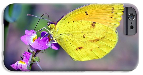 Fauna iPhone Cases - Cloudless Sulphur iPhone Case by Deena Stoddard