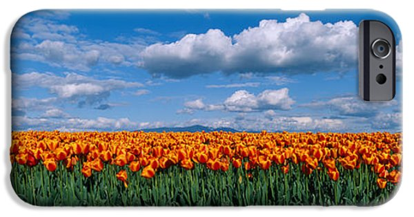 Horizon Over Land iPhone Cases - Clouds Over A Tulip Field, Skagit iPhone Case by Panoramic Images