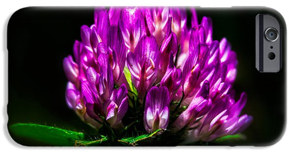 Annual iPhone Cases - Clover Flower iPhone Case by Bob Orsillo