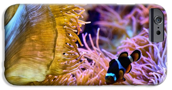 Clown Fish Photographs iPhone Cases - Clown Comfort Zone iPhone Case by Angelina Vick
