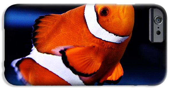 Clown Fish Photographs iPhone Cases - Clown Fish iPhone Case by Nishanth Gopinathan