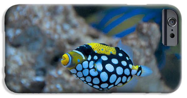 Clown Fish Photographs iPhone Cases - Clown Triggerfish iPhone Case by Mark Newman