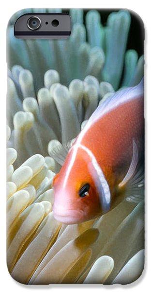 Clownfish 9 iPhone Case by Dawn Eshelman