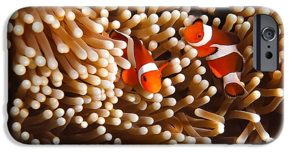Clown Fish Photographs iPhone Cases - Clownfish in Coral  iPhone Case by Fototrav Print