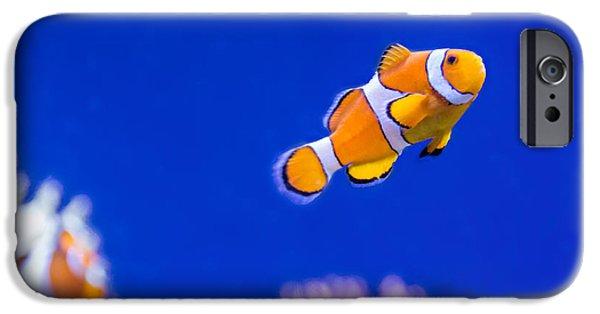 Clown Fish Photographs iPhone Cases - Clownfish iPhone Case by Steve Harrington