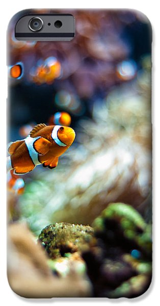 Clown Fish Photographs iPhone Cases - Clownfish  iPhone Case by Ulrich Schade