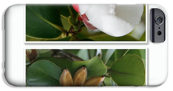Autographed iPhone Cases - Clusia rosea - Clusia major - Autograph Tree - Maui Hawaii iPhone Case by Sharon Mau