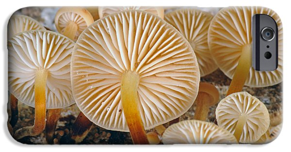 Agaricales iPhone Cases - Clustered Bonnet iPhone Case by Nigel Cattlin