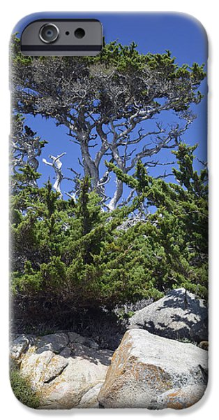 Point Lobos State iPhone Cases - Coastal Trees in Californias Point Lobos State Natural Reserve iPhone Case by Bruce Gourley