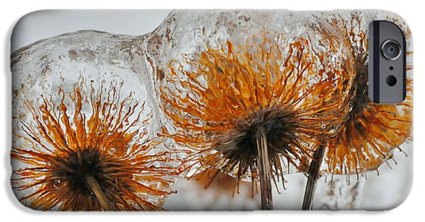 Winter Storm iPhone Cases - Coated Chrysanthemum iPhone Case by AZ Imaging