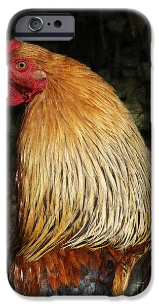 Cock iPhone Case by Angela Doelling AD DESIGN Photo and PhotoArt