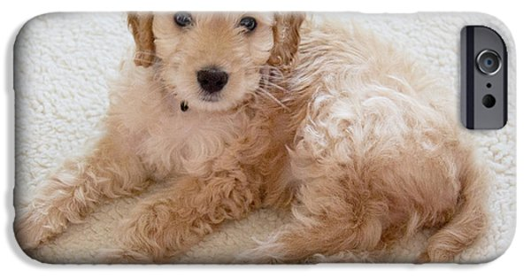 Cute Puppy iPhone Cases - Cockapoo iPhone Case by Lee Smith