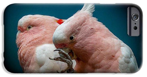 Cockatoo iPhone Cases - Cockatoos iPhone Case by Ernie Echols