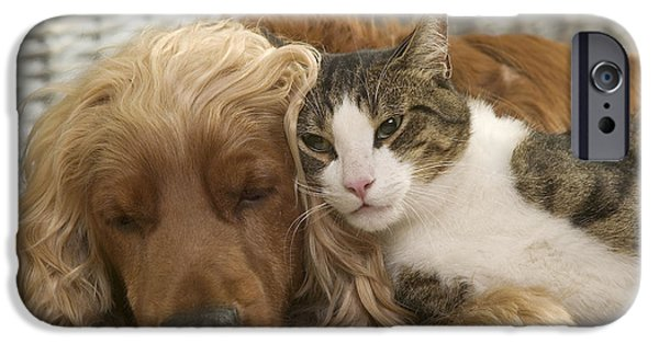 Lazy Dog iPhone Cases - Cocker Spaniel And Cat iPhone Case by Jean-Michel Labat