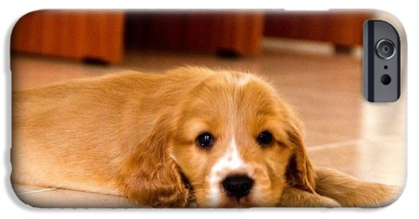 Prairie Dog Pyrography iPhone Cases - Cocker Spaniel iPhone Case by Olga Komlev