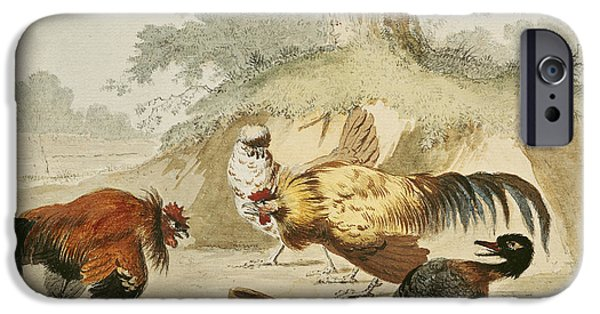 Animal Drawings iPhone Cases - Cocks Fighting iPhone Case by Melchior de Hondecoeter